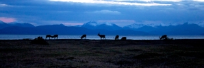 Applecross stags at dusk